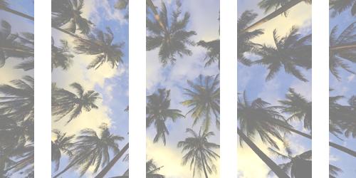 Awake...! ( palm trees headers random )