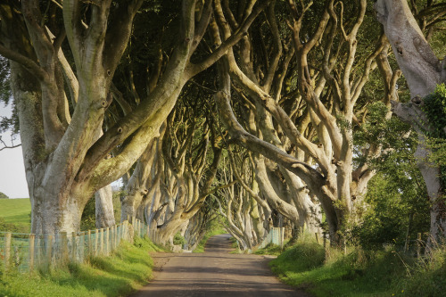 Dark Hedges, Co. Antrim, Northern Ireland (by Caitidid Designs)