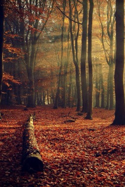 photography pretty beautiful trees fall nature forest amazing autumn leaves Sunlight
