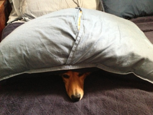 Came home to find the wiener dog like this.