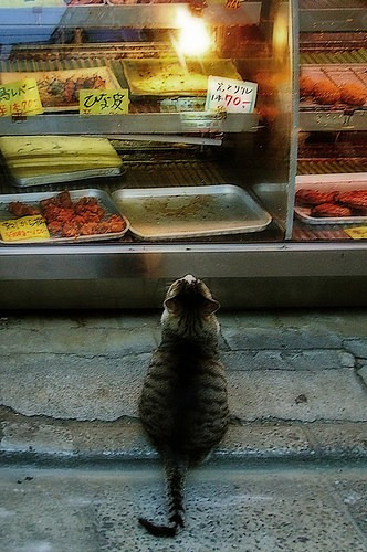778:  Kitties / Yes, I'd like a tuna filet and some shrimp please