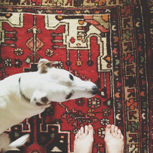 Wishbone pups, bare feet, and carpets.