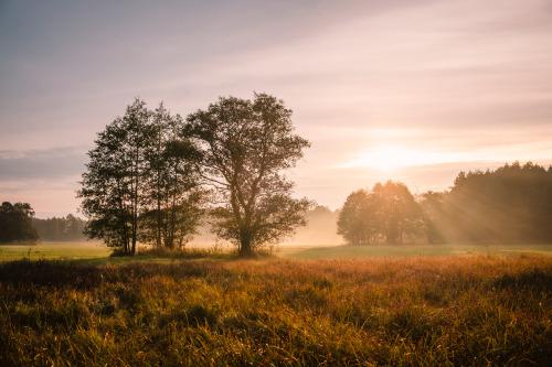 Masovian morning.Mazowiecki poranek. #mazowsze#polska#europa #kampinoski park narodowy #flora#drzewa#trawa#niebo#wschód słońca#poranek#krajobraz#natura#mazovia#poland#europe #kampinos national park #trees#grass#rural#sky#sunrise#morning#landscape#nature#łąka#meadow#2020