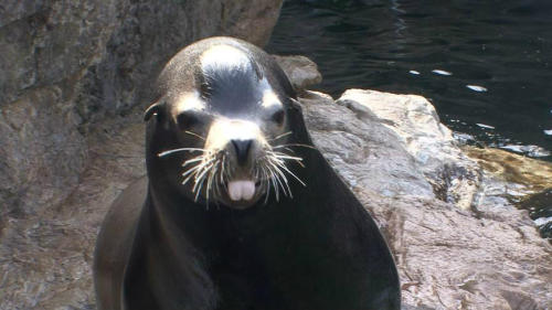 Look at that face! Tonight: The animals at the New York Aquarium & how they are recovering after Sandy.
