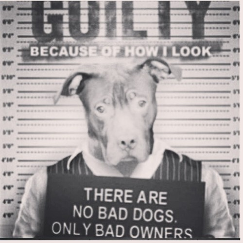 Truth! #repost #pitbulllove #pitbulls #love