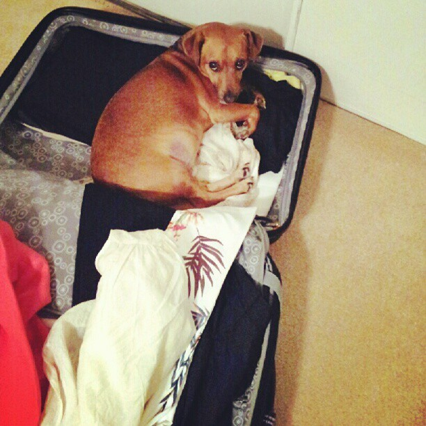 Sooo my mom is packing for Korea and I guess Nelly doesn't want her to go ♥