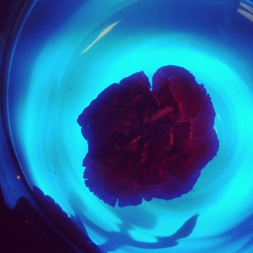 Floating flower in blue water.