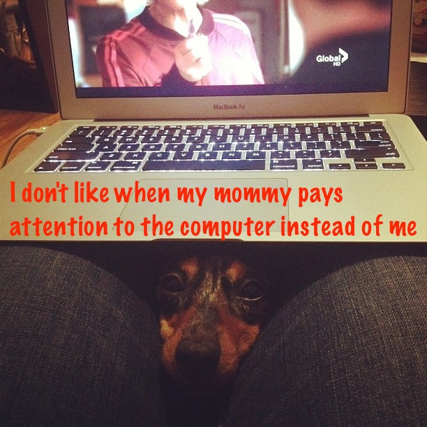 dogshaming:  Pay attention to ME! View Post