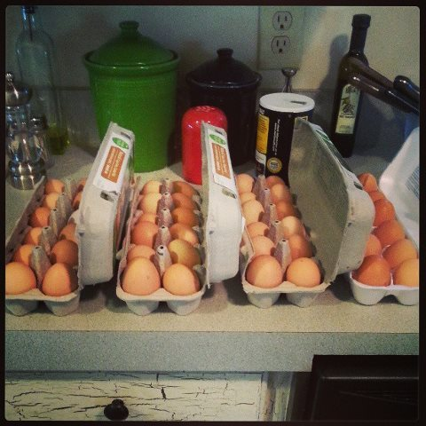 An Over Abundance of EggsOne of the doctor's at The Renaissance Man's clinic keeps chickens. And, apparently, he keeps more…View Post