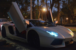 elitistview:  Matte White Aventador