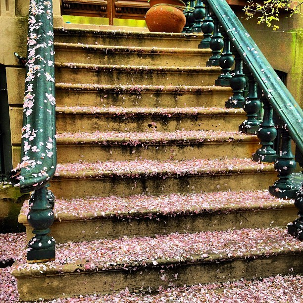 #nyc #brooklyn #brownstone #stairs covered in #flower #petals (at Clinton Hill)