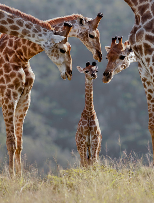 animalkingd0m:  New Arrival by Brendon Jennings