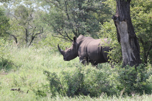 READ THIS: The Illegal Poaching of Rhino in South Africa.  Follow me: Facebook | Twitter | YouTube | Instagram