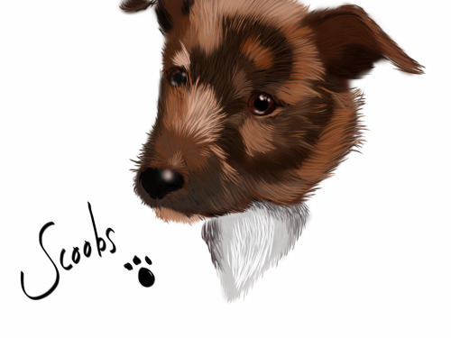 Messing about on an iPad, Illustration of my dog :)