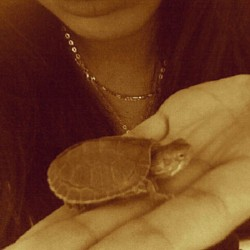 R.I.P. Squirtle Turtle. I love you so much :(