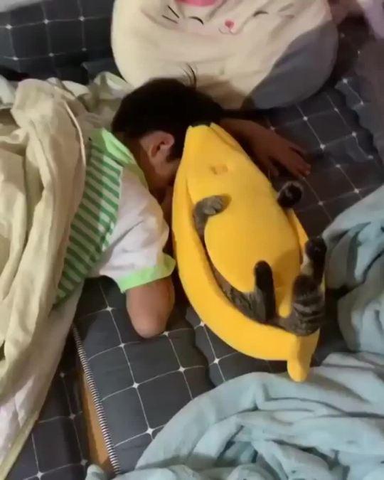 BANANA + CAT