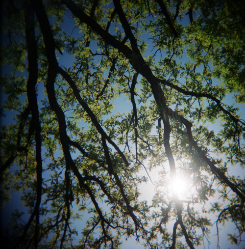 The last resort of a desperate photographer. Look up and shoot trees. #Holga #photojournalism #eventualgram
