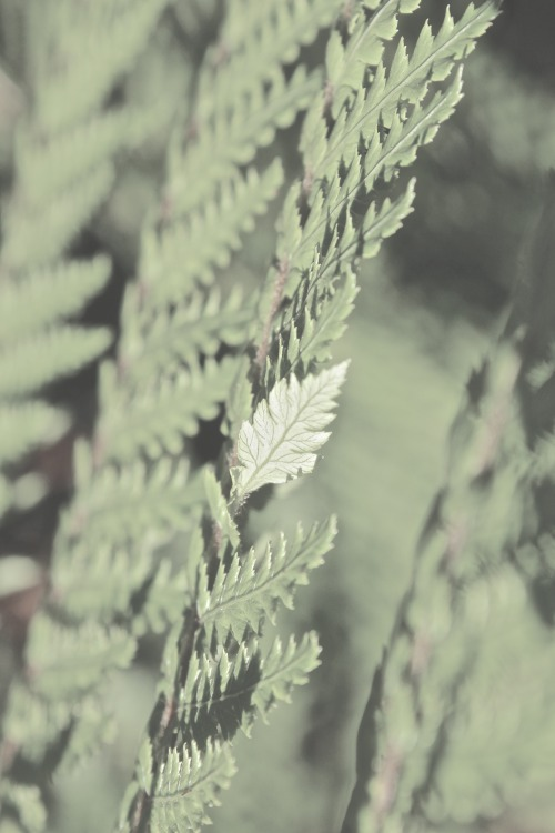 An untitled photo I snapped in New Zealand, the Kingdom of Ferns. This little island is full of awe-inspiring beauty. ~F.