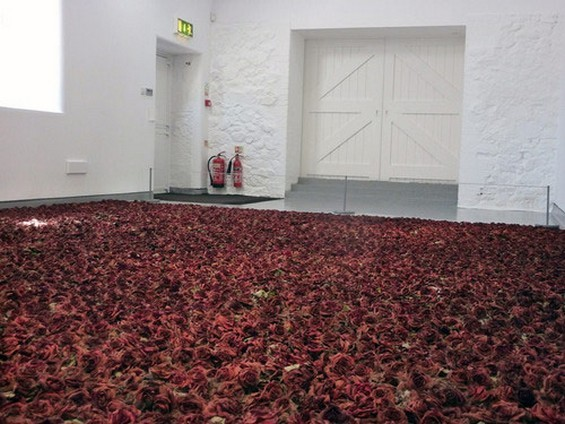 ryandonato:  Anya Gallaccio's installation Red on Green may leave elicit a different reaction depending on when you catch the show. Gallaccio plucked the heads of 10,000 roses and arranged them into large neat rectangle. At first the installation may resemble a grand romantic gesture. However, Gallaccio's interest is piqued by what the installation becomes. In a way Red on Green turns into a type of natural performance as the field of red shifts to brown. She utilizes the loaded symbol of the rose as a starting point for investigating the natural processes of death and decay.