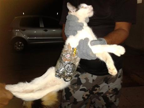Cat used in Brazil prison smuggling try LMAO Good try.