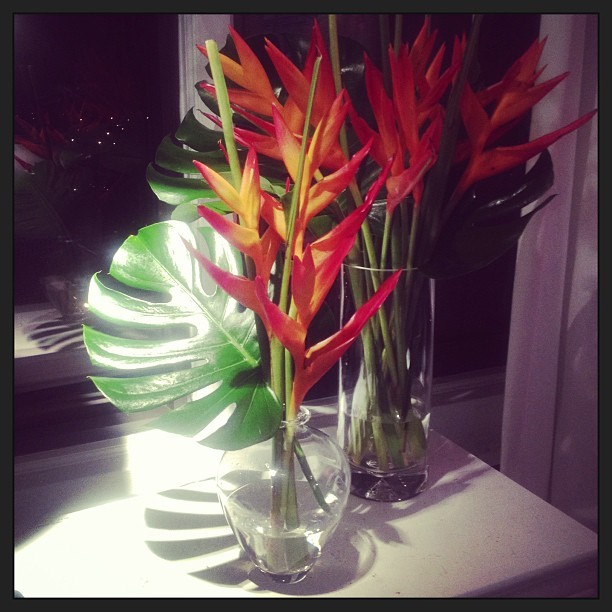 Check out the Flower of the day at the apt. #flowers #color #home #decor #luxury #fab #ig #igers #pictures #iphone #beauty #lovely #instagramhub #energy #flow #floral #real #gays #gayboy #stylemonk  (at home of the Style Monk)