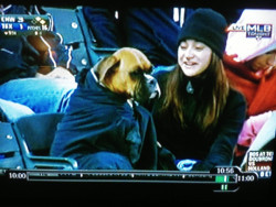 usatodaysports:  This dog is a dedicated baseball fan. It was hard to identify at first given its disguise, but this is definitely a dog. A very cool dog.