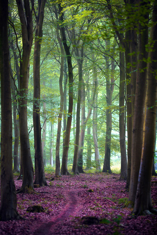dearscience:  Friston Forest by Alan Mackenzie