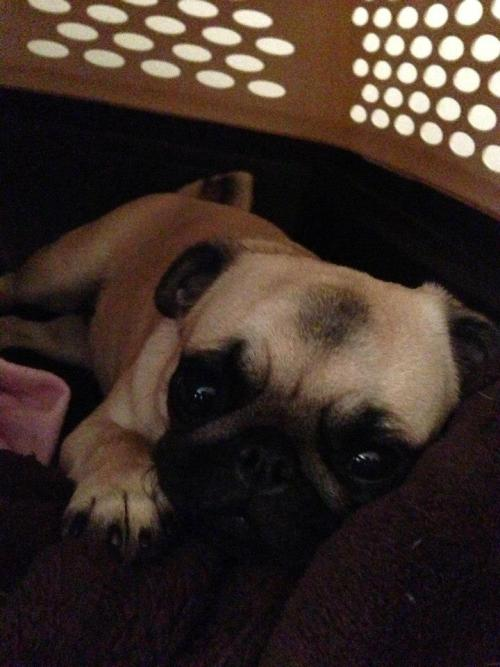 mugsofpugs:  submitted by Wendy