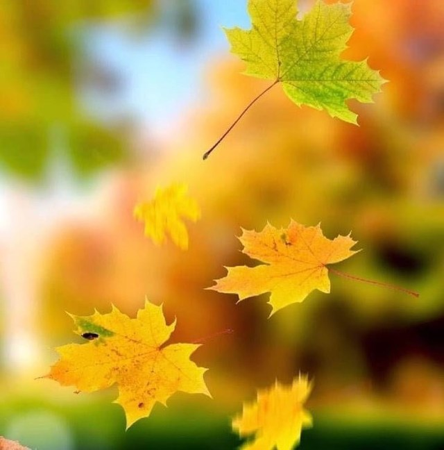 Io sono il vento aria fresca e pura buffo lieve che da respiro soffio intenso che ti trasporta sono il vento... sono vita  #BuonaDomenica   #NoiSiamoIlDestino S4Medizioni   in vendita www.s4m-edizioni.it, Amazon, on line anche in versione Kindle  #ParlamiDiPoesia #Parole #Libri #lettura #narrativa #poesia #booklovers #book #books #reading #leggere #Libro #romanzo #emozione #destino #novità #coraggio #amoleggere #leggo #ioleggo #amor #life #lifestyle #amore #frasi #libridaleggere #librichepassione #libriconsigliati https://www.instagram.com/p/CVZoJr7IE1I/?utm_medium=tumblr #buonadomenica#noisiamoildestino#parlamidipoesia#parole#libri#lettura#narrativa#poesia#booklovers#book#books#reading#leggere#libro#romanzo#emozione#destino#novità#coraggio#amoleggere#leggo#ioleggo#amor#life#lifestyle#amore#frasi#libridaleggere#librichepassione#libriconsigliati