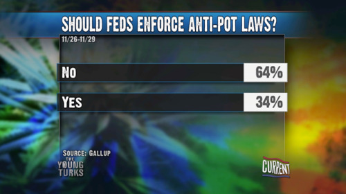 Should Feds Enforce Anti-Pot Laws? Poll Resultsvia The Young Turks