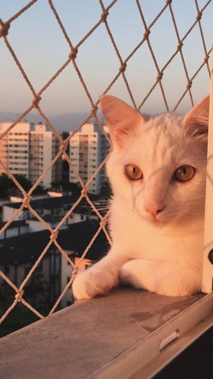 robertopenichee cats gato