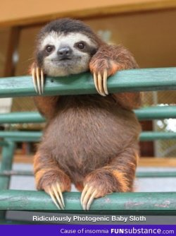 funsubstance:  Photogenic sloth