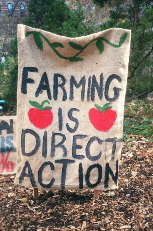 "thepeoplesrecord:  Uprooting racism in the food system: Communities organize for justiceMarch 11, 2013 A shovel overturned can flip so much more than soil, worms, and weeds. Structural racism - the ways in which social systems and institutions promote and perpetuate the oppression of people of color – manifests at all points in the food system. It emerges as barriers to land ownership and credit access for farmers of color, as wage discrimination and poor working conditions for food and farmworkers of color, and as lack of healthy food in neighborhoods of color. It shows up as discrimination in housing, employment, redlining, and other elements which impact food access and food justice. Many people involved in creating food - from Haitian tomato pickers organizing in Florida, to Native Americans saving seeds in Arizona, to Black Detroit residents growing gardens in fractured neighborhoods – are simultaneously chipping away at structural racism. In the Harvesting Justice series we touch on many of these issues, starting with a look at African-American farmers and what they doing to win justice in the food system. In 1920, one in every seven farmers in the U.S. was African-American. Together, they owned nearly 15 million acres. Racism, violence, and massive migration from the rural South to the industrialized North have caused a steady decline in the number of Black farmers. So, too, has, institutional racism in the agricultural policies of the USDA. By 2007, African-American farmers numbered about one in 70, together owning only 4.2 million acres. Over the years, studies by the U.S. Civil Rights Commission (CRC), as well as by the USDA itself, have shown that the USDA actively discriminated against Black farmers, earning it the nickname 'the last plantation.' A 1964 CRC study showed that the agency unjustly denied African-American farmers loans, disaster aid, and representation on agricultural committees. But organizations like the National Black Farmers Association, the Black Farmers and Agriculturalists Association, the Land Loss Prevention Project, and the Federation of Southern Cooperatives have been challenging racism in agricultural policy through legal action. In 1997-98, African-American farmers filed class-action lawsuits against the USDA for unjustly denying them loans. The lawsuits were consolidated into one case, Pigford v. Glickman, which was settled in 1999. But due to delays in filing claims, nearly 60,000 farmers and their heirs were left out of this settlement. In November 2010, the U.S. Congress passed the Claims Settlement Act (known as Pigford II) to compensate Black farmers who were left out of the first settlement. President Obama signed the bill a month later, making $1.25 billion available for claimants in the form of cash payments and loan forgiveness, though the Black Farmers and Agriculturalists Association has filed an appeal because Pigford II provides smaller payments and places limits on claimants' future legal options. bell hooks wrote, ""Collective black self-recovery takes place when we begin to renew our relationship to the earth, when we remember the way of our ancestors… Living in modern society, without a sense of history, it has been easy for folks to forget that black people were first and foremost a people of the land, farmers.""[1] Some who are still farmers are carrying on the fight for economic and civil rights for land-based African-American people, a fight which dates back to the days of slavery. Probably the most impressive contemporary example of such organizing has been the Federation of Southern Cooperatives. An outgrowth of the civil rights movement, it formed in 1967 when 22 cooperatives met at Atlanta University. The federation has used collective action ever since to support Black and other small farmers and rural communities. Today, their members include over 100 coops in 16 states across the South. A fast-growing movement is African-Americans reclaiming their connection to their urban land and their food, as part of food justice and food sovereignty movements. People's Grocery and Mo' Better Food in Oakland, Growing Power, Rooted in Community, Detroit Black community Food Security Network, and many others are organizing with farmers and connecting African-American growers and consumers. Many of these, such as the Detroit Black Community Food Security Network, are working forcommunities of color to have democratic control over their own food systems. Their work includes youth programs and urban gardening in areas where access to healthy, affordable food is limited, as is the case in many low-income and people of color neighborhoods. These groups are also raising awareness of the ways that African-American communities, and communities of color in general, have been sidelined within the food movement itself. Inclusion and participation of people of color has come slowly and late. Often, African-American neighborhoods are targeted as 'intervention' areas by outside organizations that - though well-meaning - are neither led by nor accountable to the community and its most urgent needs and goals. The prevailing white culture of the food movement as a whole creates barriers: the typical image of farmers presented often reflects a white archetype and the types of food solutions presented are not always culturally relevant or practical. A critical element of many African-American groups' work thus involves nation-wide education and organizing on structural racism as it impacts health, farming, food, and land. Among other elements, these organizations are committed to knocking down barriers to food production and food access. Some have joined the world-wide movement for food sovereignty, in their own communities and through the U.S. Food Sovereignty Alliance, so that citizen control over food and agriculture can exist across global economic systems. Ultimately, we all eat, and we are all implicated. Achieving racial justice in the food system is not the sole burden of African-Americans organizing but will take multiracial alliances of people raising awareness of systemic disparities, and working together to end them. SourcePhoto I want to add many Latino & low-income communities have started community farms as well. It's a huge step toward autonomy, mutual aid & collectivism in these areas where healthy food isn't readily available or it's very expensive. I recently began working with a women's collective & migrant farm workers to develop a community farm in south El Paso near the Texas/Mexico border. I would really encourage people with the time & resources to start organizing a community farm because food justice is a human right's issue!"