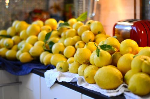 Harvested a gazillion lemons from my friends tree. These will be sent to friends and family who are sick of winter, and I might have to make some ginger lemonade. Yum!