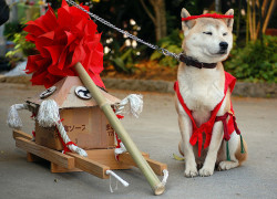japanlove:  dog at matsuri by showbizsuperstar on Flickr.