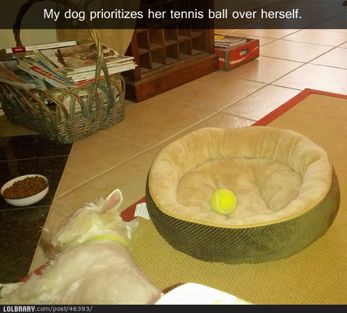 dailyrandompictures:  Just one more reason why dogs rule. Follow this blog for the best new funny pictures every day