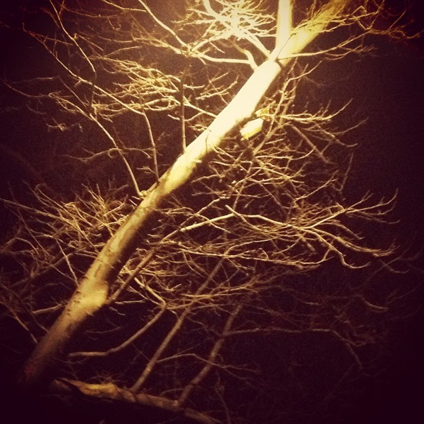 Street light in branches. #lightstagram #streetlight #nyc