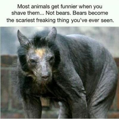 Shaved bears - brought to you by the people of the Internet