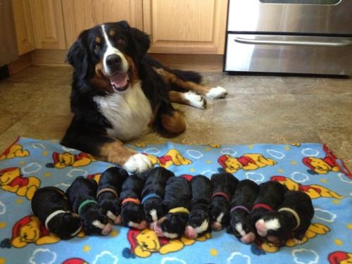 "rynnay:  papa-scotch:  ""I made these!""  SHE'S SO PLEASED WITH HER FAMILY"