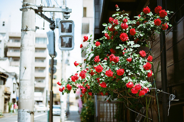 ileftmyheartintokyo:  untitled by fixedfocal on Flickr.