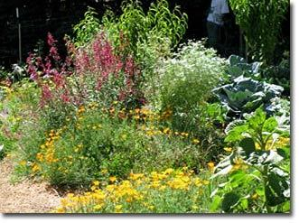 Food forest inspiration (via Food Forests Across America Permaculture Forums, Permaculture Courses, Permaculture Information & News)