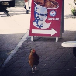 Though I walk through the valley of the shadow of death… #chicken #kfc #walkofshame #cocky #cockblock #vegan #vegetarian