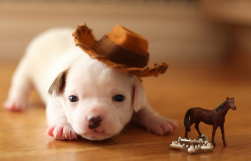 thefrogman:  There's a new Sheriff in town! by Okiedoll [flickr]