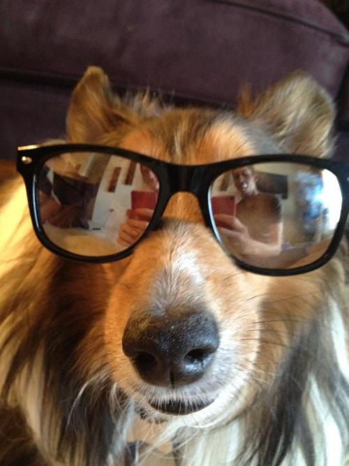 My dog is a hipster, too bad he can't have a tumblr. Sucks not having opposable thumbs.