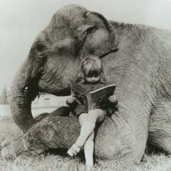 Me in another life. #elephant #reading #vintagephotos
