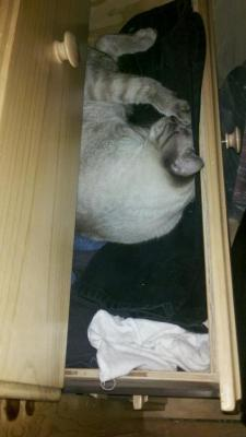 "getoutoftherecat:  get out of there cat. you do not belong in t-shirts drawer. you're much more a ""shorts"" person."