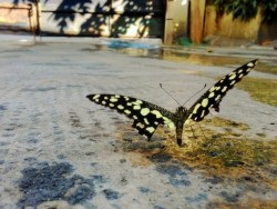 butterfly by Yas Ocampo on EyeEm