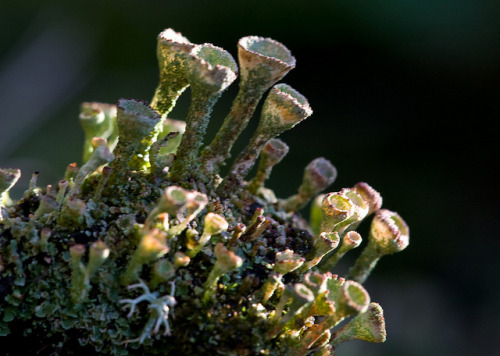 Lichens on Flickr.
