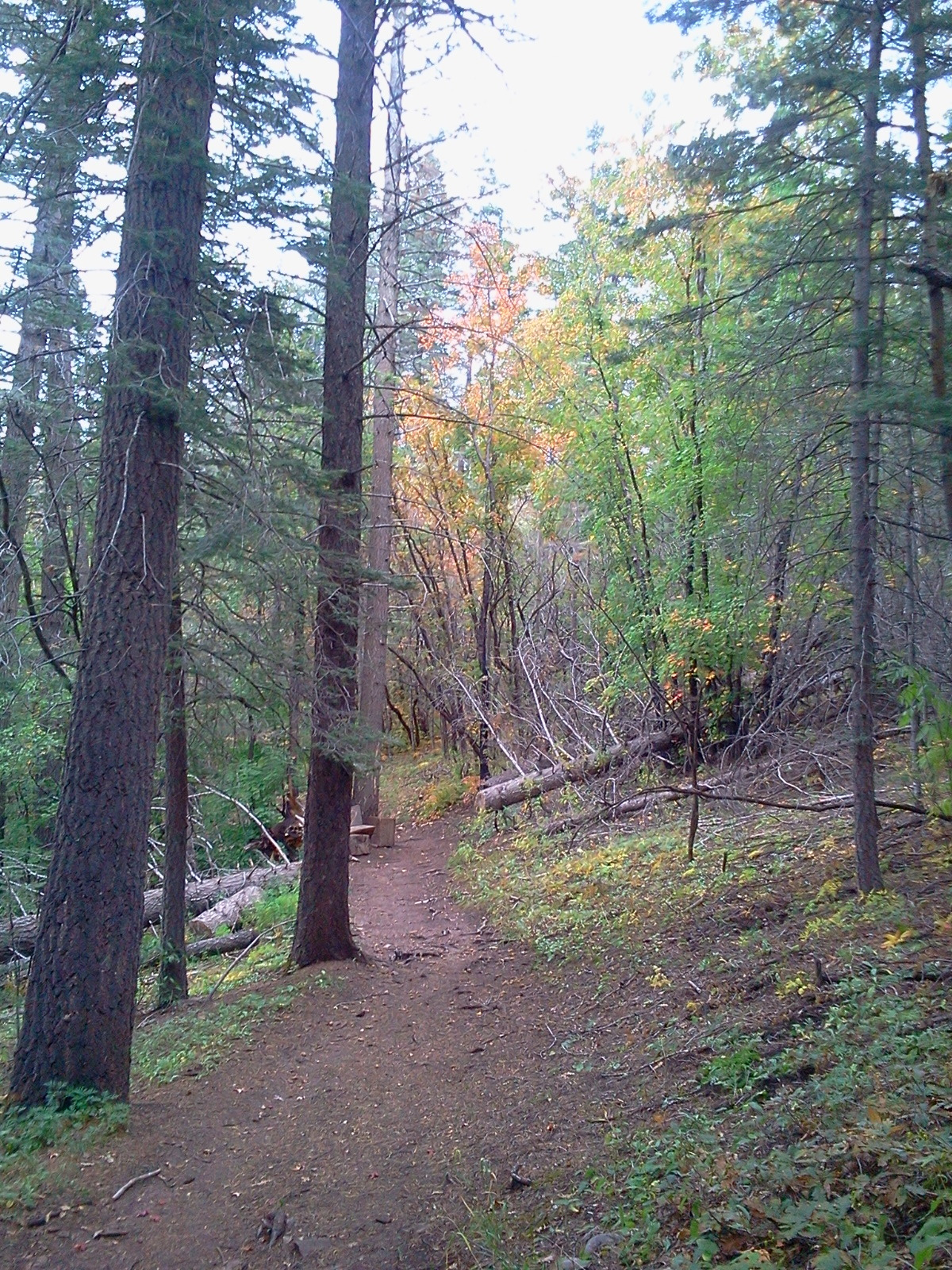 Trail outside of Cloudcroft, New Mexico.