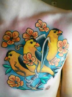 "fuckyeahtattoos:  Yellow birds and peach blossoms, done by Frank Mostek at Paper Planes Tattoos in Modesto, CA.  Inspired by the songs ""We Are Nowhere and It's Now"" and ""Poison Oak"" by Bright Eyes."